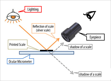 Microscope | Micrometer | Calibration